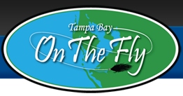 Tampa Bay On The Fly