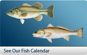 Check our Fish Calendar